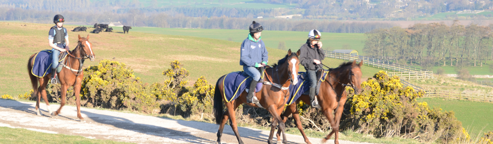 Middleham Racing Tours